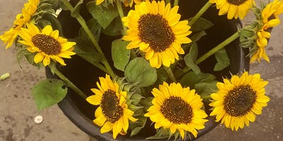 Sunflower Festival Lanni Orchards Inc Aug 31 through Sept 8th