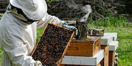 Northern Beaches Beekeepers Apiary Field Day - Sun 18 Aug 2019