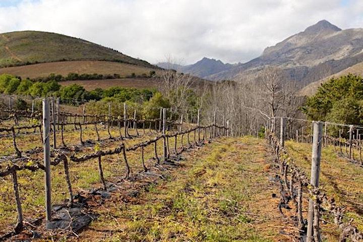 Le Riche Estate: Stellenbosch Cabernet Masterclass with Christo Le Riche image