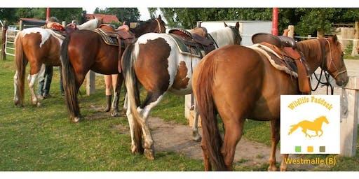Groepsles - Bitloos Western Riding + Horsemanship