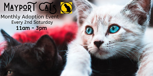 Mayport Cats Monthly Adoption Event