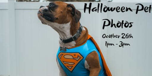 FREE Halloween Pet Photos