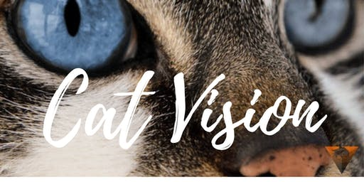 "Masterclass Cat Vision B: instaples ""Introductie van de kat"""