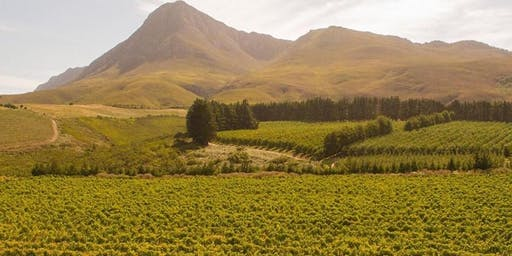 Creation Wines of Walker Bay, South Africa with Daniela Messina
