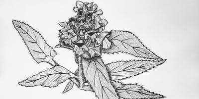 Botanical Drawing Workshop at The Tria Prima