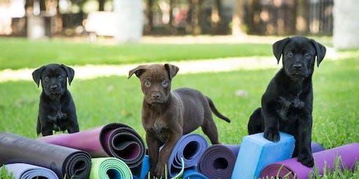 Puppy Yoga Fundraiser