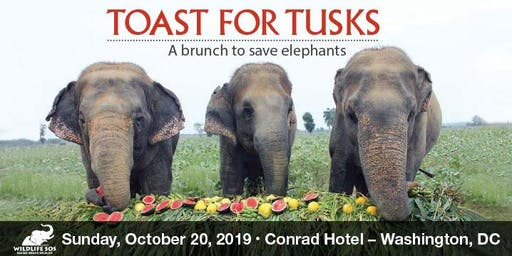 Toast for Tusks