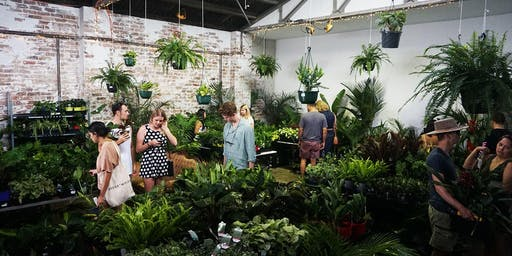 Sydney - Huge Indoor Plant Warehouse Sale - House Warming