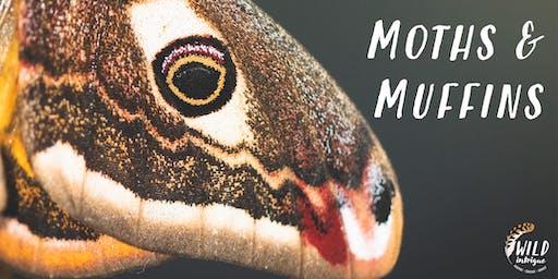 Moths & Muffins Morning | Racy Ghyll Farm