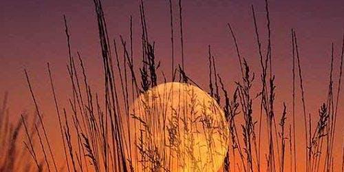 Harvest Moon Yoga & Sacred Tea Ceremony