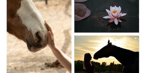 Equine Assisted Meditation