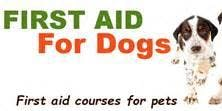 Accredited Canine First Aid Course