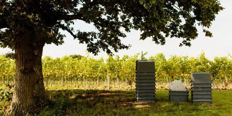 English Sparkling Wine Tasting with Gusbourne Estate tickets