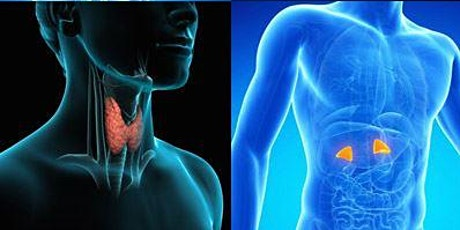 Endocrinology - Management of Thyroid Conditions and Diabetes tickets