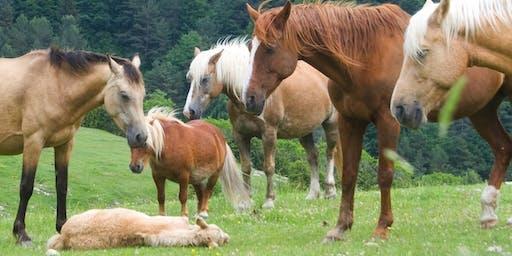 Un dia entre cavalls lliures al Pla de l'Orri