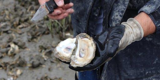Exploring South Carolina's Oysters