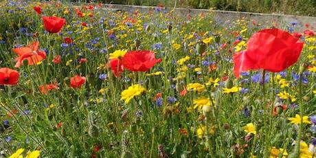 Wildflower Workshop tickets