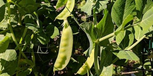 Edible Gardening Basics