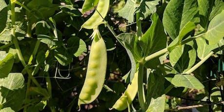 Edible Gardening Basics tickets