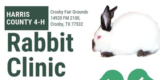 Rabbit Clinic