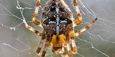 Beginners guide to Spider ID