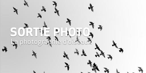 Sortie Photo // La photographie d'oiseaux
