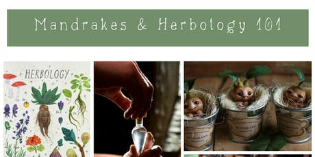 School of Magic: Mandrakes & Herbology 101 tickets