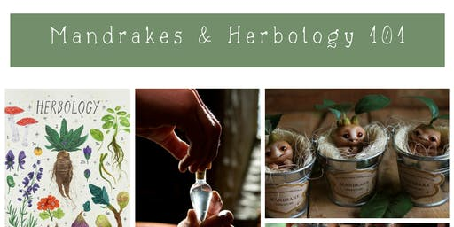 School of Magic: Mandrakes & Herbology 101