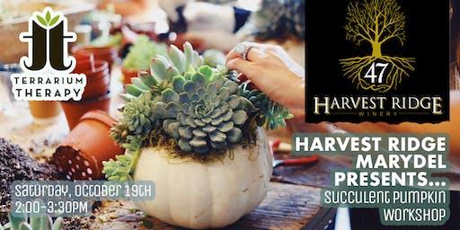 Pumpkin Succulent Workshop at Harvest Ridge Winery
