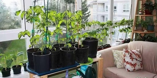 Growing Food At Home Year-round