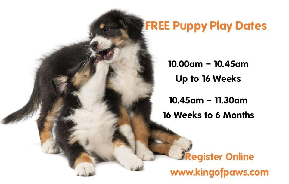 Puppy Play Dates 2020-(16 Weeks Up to 6 Months Old)