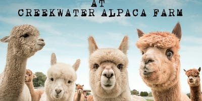 Photography Day at Creekwater Alpaca Farm