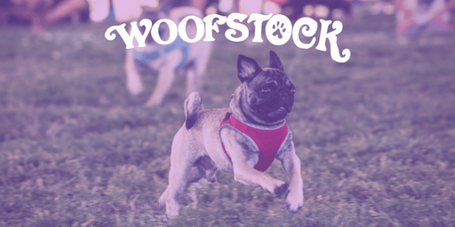 Woofstock 2019 Wiener, Pug, and Open Division Dog Races