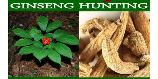 Wild Wednesday - Ginseng