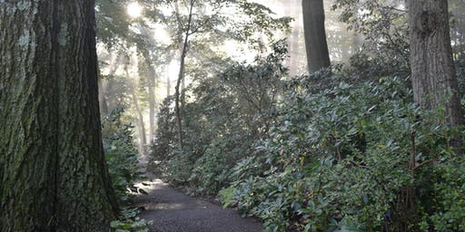 Forest Bathing for Health and Wellness
