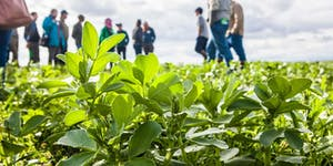 Cover Crop Field Day