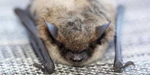 Land Stewardship Series - The Bats of Jeffco