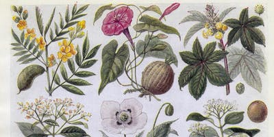 Draw the Collections: Medicinal Plant Still Life
