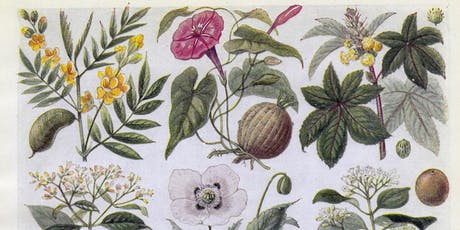 Draw the Collections: Medicinal Plant Still Life tickets