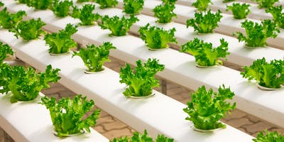 Introduction to Hydroponics