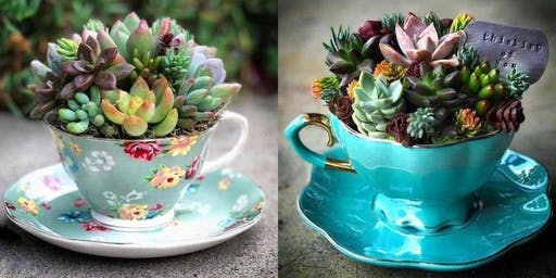 Afternoon Tea & Succulents
