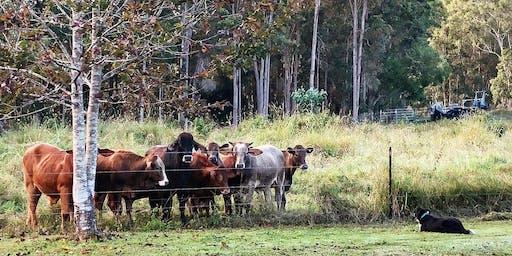 Cooloola Farm Trail