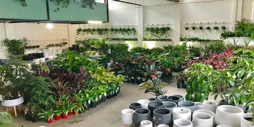 Mega Indoor Plant + Pot Warehouse Sale - Pop Up Shop
