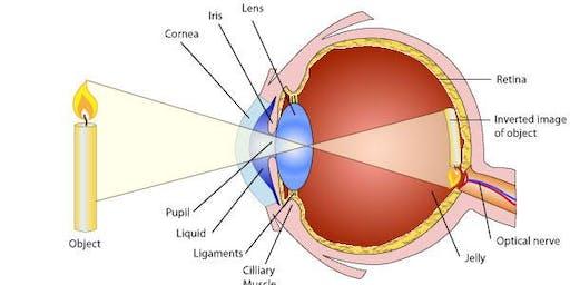 Encounters: Eyes & Physics