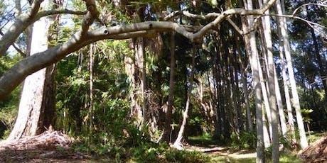 Big Scrub Rainforest Day guided walks and talks tickets