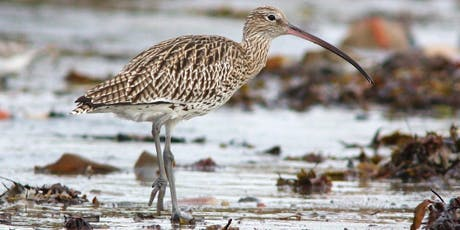 Out of One's Depth? An Introduction to Wading Birds tickets