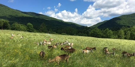 Grazing Fundamentals Pasture Walk at Ice House Farm tickets