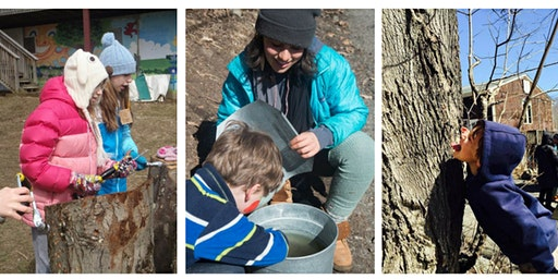 Maple Sugaring at Eden Village 2020