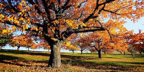 360º Kinoschiff | Herbstwelten Tickets