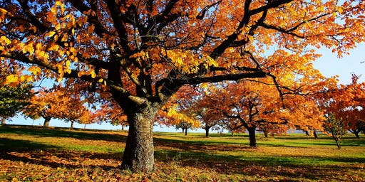 360º Kinoschiff | Herbstwelten